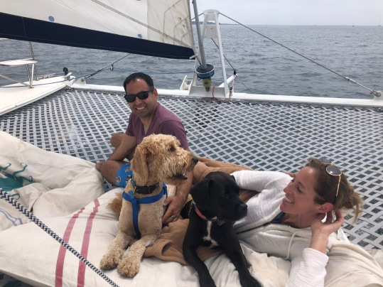 Sailing dogs on catamaran