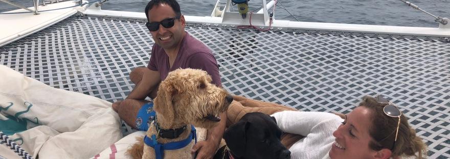 Sailing dogs on catamaran