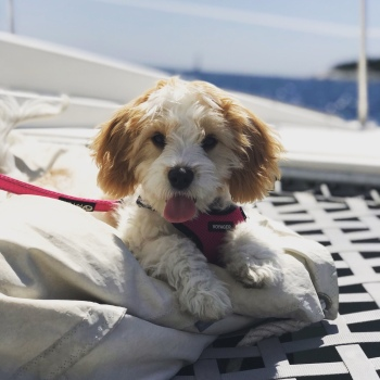 Puppy loves catamaran sailing
